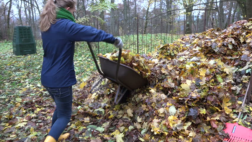 worker woman carry wheelbarrow cart full of dry leaves and dump it on big compost pile