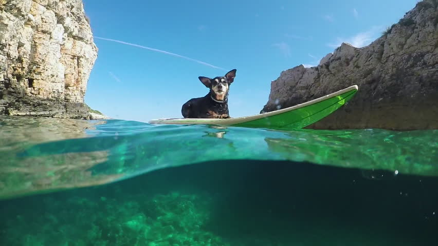 SLOW MOTION, HALF UNDERWATER, CLOSE UP: Adorable fearless adventures senior pet dog lying on surfboard and surfing in crystal clear green ocean water between dangerous sharp rocky walls in Croatia #18620456