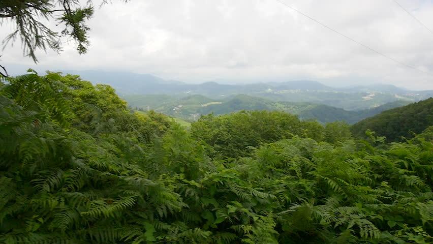 Panorama mountain woodland - HD stock footage clip & Tropical Rain Forest Banyan Tree Canopy Jungle Hawaii Time ...