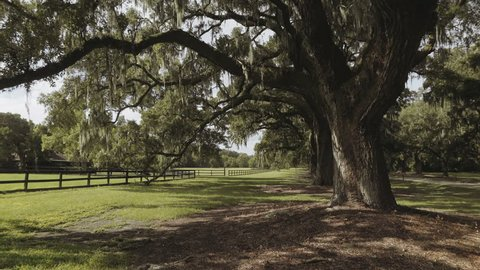 Pan shot of an oak tree in an old plantation in Charleston, South Carolina