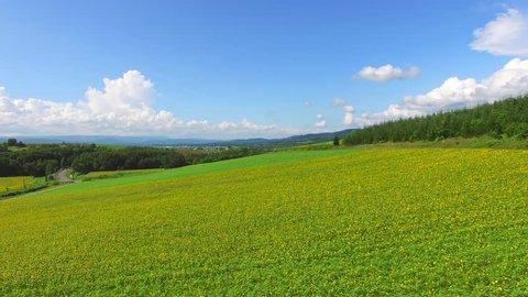 Aerial: Nayoro Sunflower Fields Low Pass Flight, Hokkaido, Japan