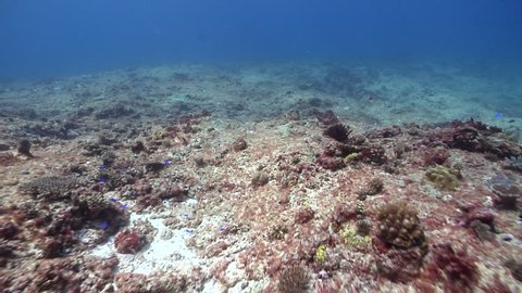 Ocean scenery mostly dead and barren reef, some small coral recruits and algae, surge zone, on shallow coral reef, HD