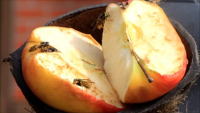 Wasps on apple fruit  | Shutterstock HD Video #18889727