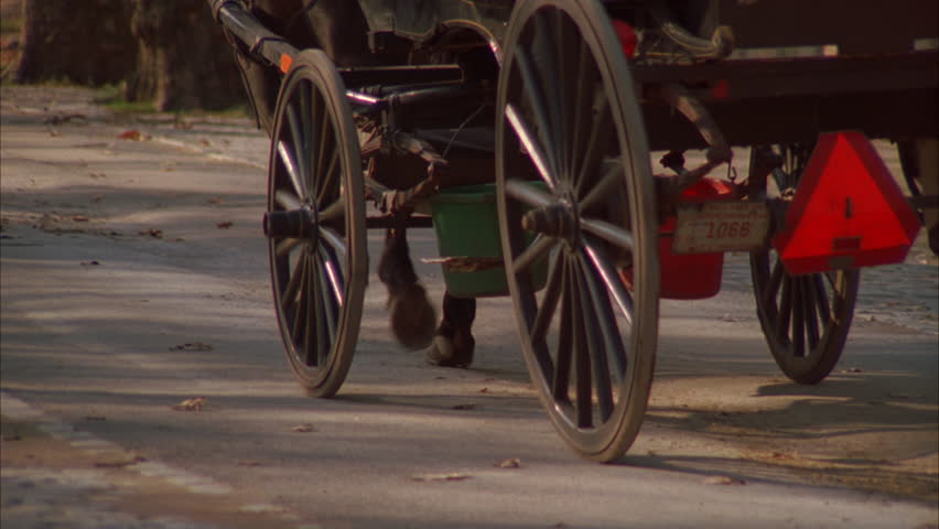 day Low tilt up horse drawn carriage hansom cab away Central Park, fall left, autumn, New York rake