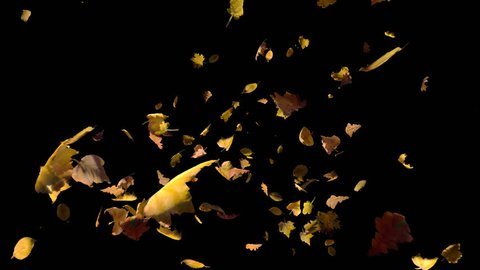 Falling autumn yellow leaves away from camera, cross frame forward transition, wide close up view,  isolated on alpha channel with black white matte, perfect for digital composition film video mapping