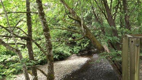 A daytime establishing shot of a creek near the fish hatchery in Issaquah, Washington.