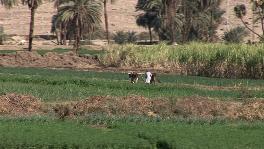 Farming off the Nile