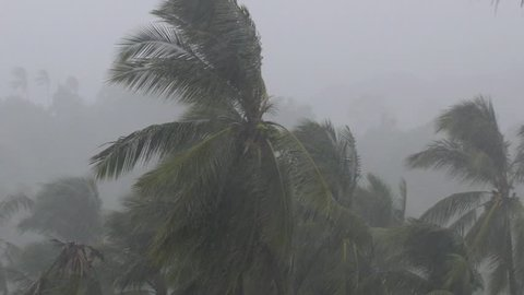 Tropical Monsoon Rain Over Palm Trees in Jungle. Bad Weather