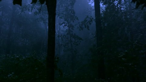 A handheld shot made in the middle of a forest in the middle of a storm at night with cinematic night shot lighting as the winds and rain beats down trees in a violent display revealing awesome power.