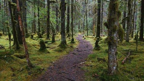 RAIN FOREST NEAR GUSTAVUS ALASKA - AUGUST 2016: POV-Walking pathway through a moss covered Alaskan rain forest on a gloomy, cloudy, rainy day - gyro stabilized.