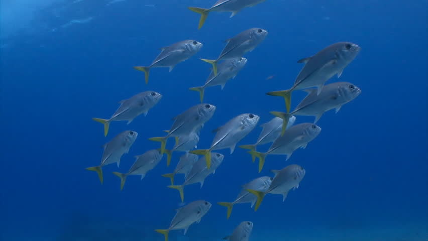 Image result for image of school of fish in deep water