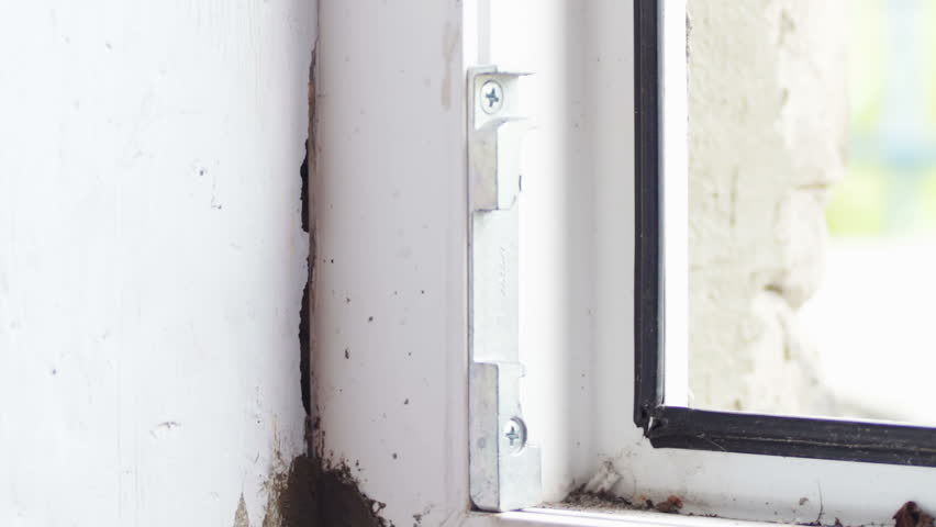 Black Mold Growth in Building. Stock Footage Video (100% Royalty ...