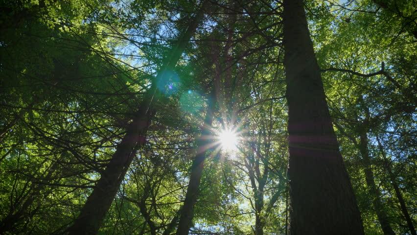 Image result for sunlight gleaming
