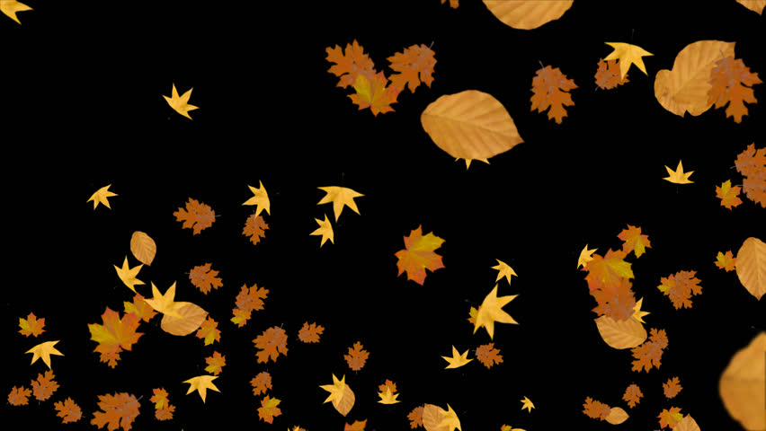 In Fall 05 - HD stock footage clip