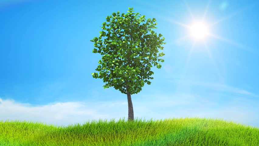 Tree growing on a green hill with the sun and clouds background. Timelapse. HD 1080.