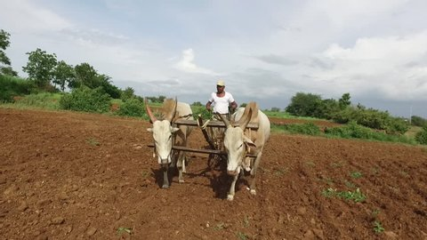 Full Hd video footage in slow motion of real farmer ploughing in the field at Veer town, Maharashtra, India.