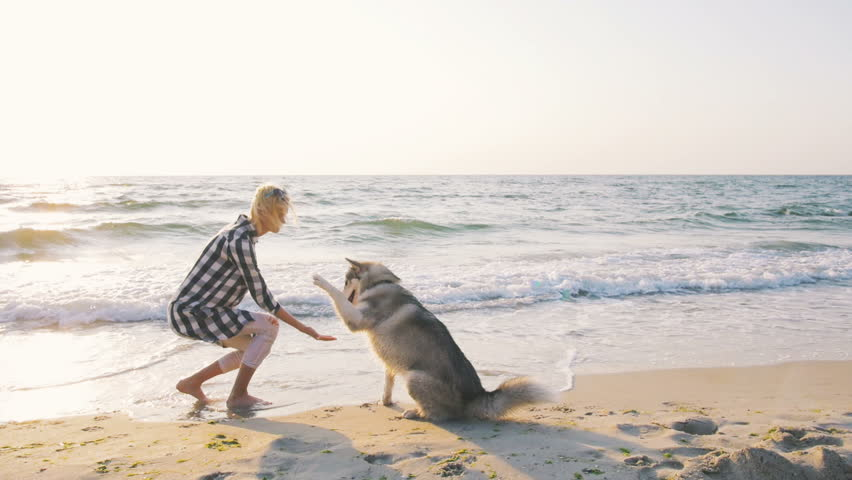 Young female playing with siberian husky dog on the beach at sunrise, slow motion