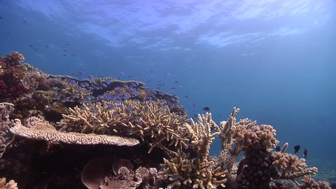 Ocean scenery on shallow coral reef, HD, UP16152
