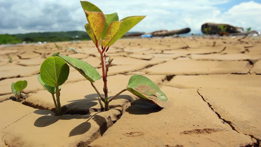 Tree seedling growing in the bottom of a dried up pond on the Pacific coast of Ecuador | Shutterstock HD Video #1984687