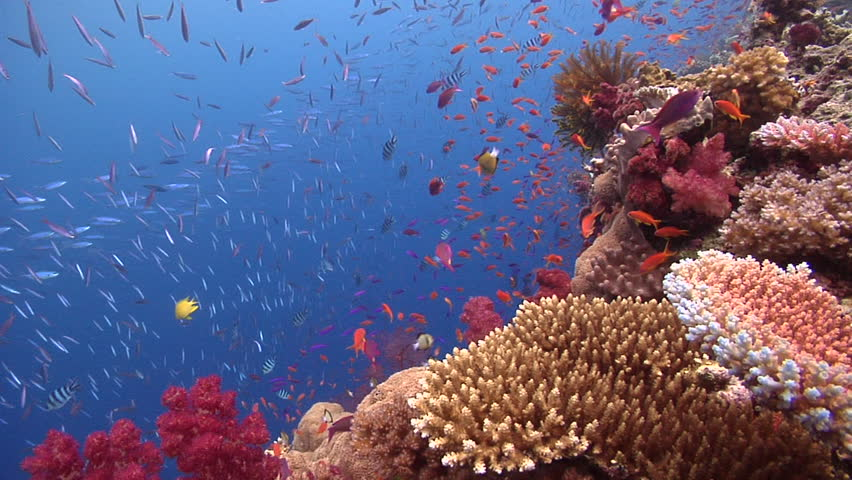 Beautiful underwater scenery, lots of dramatic action, on shallow coral reef, HD, UP16284