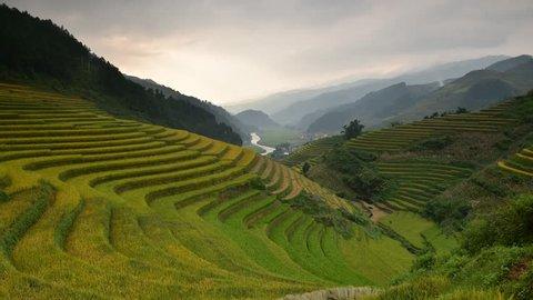 Rice fields on terraced in sunset at Mu chang chai, Yen bai, Vietnam. Rice fields prepare the harvest at Northwest Vietnam