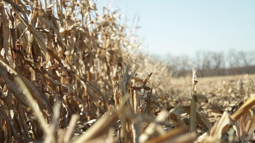 A harvested field in wind | Shutterstock HD Video #2013857