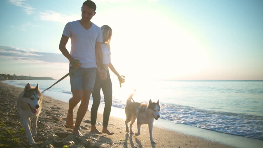 Young beautiful couple smiling walking with dogs...