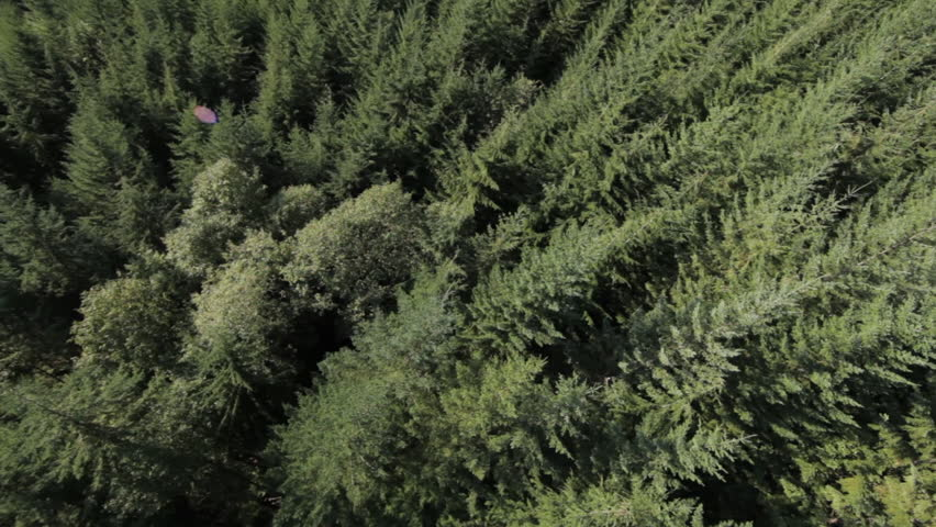 Aerial View of Pinetrees
