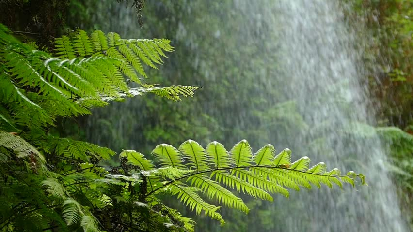 Close-up of ferns moved by the breeze with background of falling water. Slow Motion