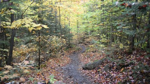 Autumn foliage with red, orange and yellow fall colors in A Northeast forest with hiking trail