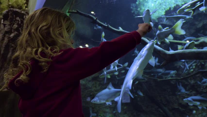 Curious Little Girl Traces Her Finger Along The Glass Of An Aquarium Tank, A Fish Follows Along