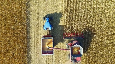Harvesting Corn with a Combine and Grain Cart