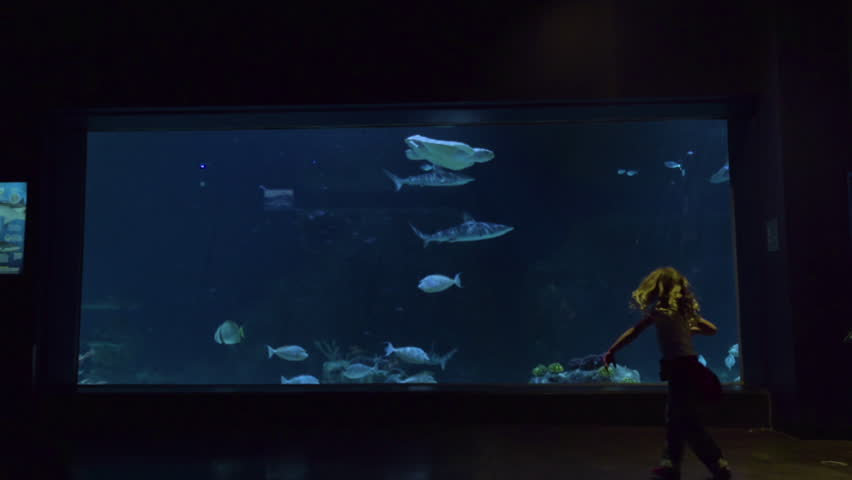 Excited Little Girl Runs Over To Glass Tank At Aquarium, Large Fish And Sea Turtle Swim By