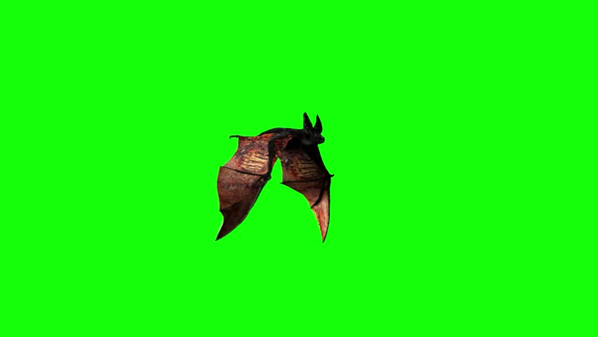 Bat are flying on a green background of Halloween  render 3D