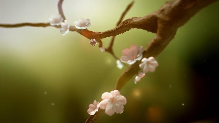beauty sakura flowering