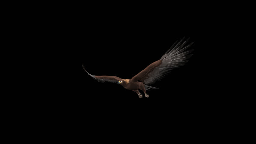 Golden Eagle - Flying Loop - Side Angle View - Alpha Channel - 4K - 3D animation of prey bird isolated on transparent background for your nature, travel and fantasy projects.