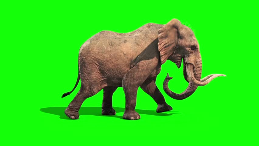 Elephant Walks Static Side Green Screen | Shutterstock HD Video #20583457