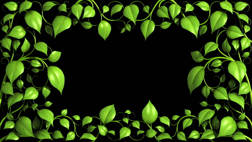 Plant pattern with leaves is growing on black background in HD 1080 with alpha mask.