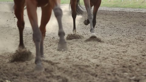 Horse racing. The feet of the horses raising dust and dirt. Slow motion
