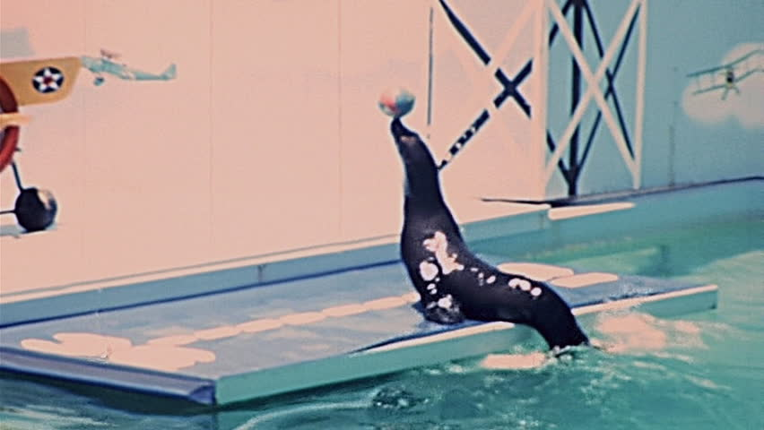 LOS ANGELES - 1977: seals play with a ball at Marineland of the Pacific in 1977 in Los Angeles