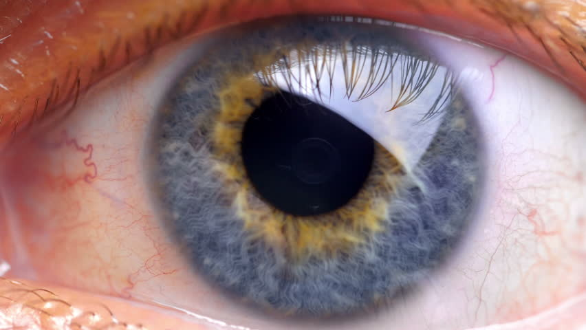 Extreme close up human eye iris in 4K UHD video. Human eye iris contracting. Extreme close up. 4K UHD 2160p footage. #20844217