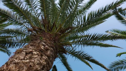 Camera Crane Moving Under Palm Tree, 4k