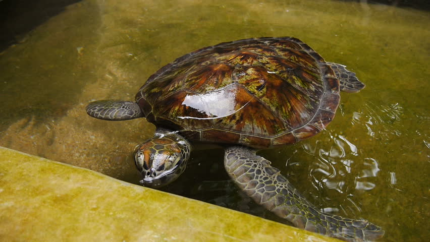 Turtle coin pool