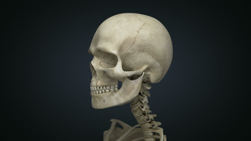 Skull and spine rotating. 3d animation of the upper skeleton. Contains alpha matte.