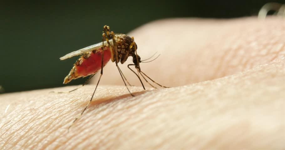 Infected mosquito bite symptoms