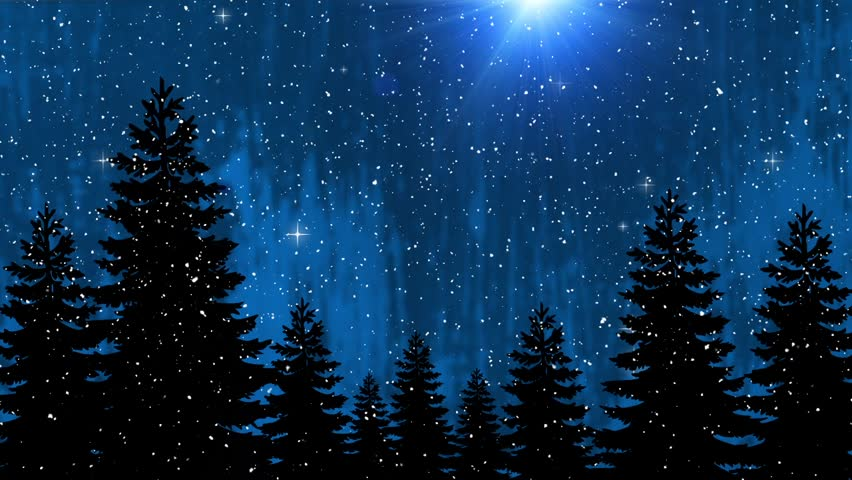 Sparkling Christmas Trees In The Starry Night, Shining Pine Trees ...