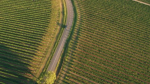 Aerial - Car driving on road between the vineyards at sunset
