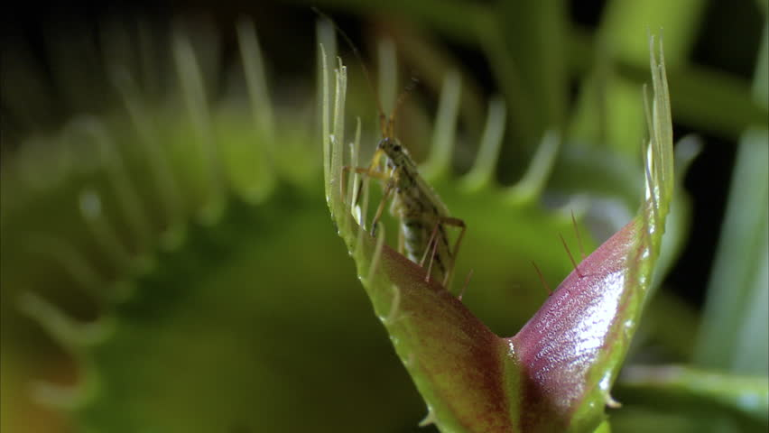 Header of Insecta
