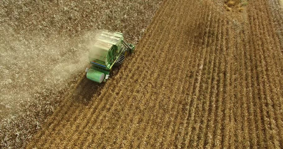 Combine picking cotton in the field - top shot.