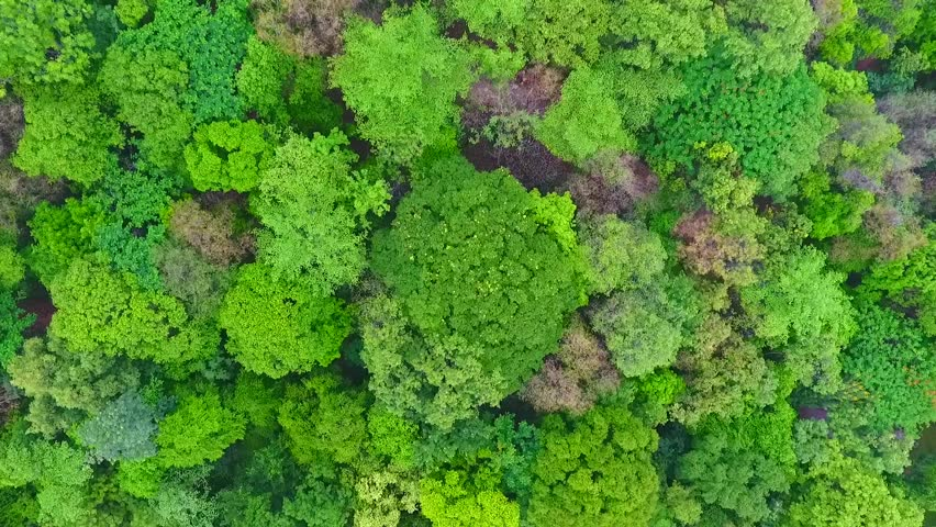 Stock Video Of Forest Landscape Top View
